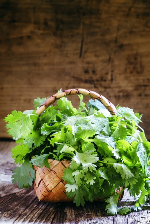 Fresh cilantro in a wicker basket, vintage wooden background, selective focus