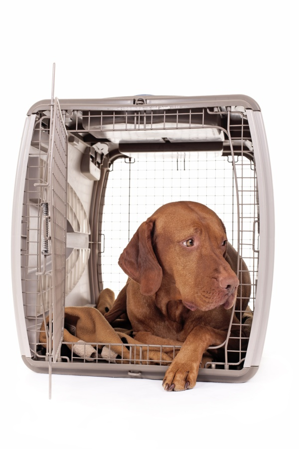 dog laying in crate